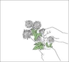 Sentimentalist - CD Audio di Sanso Xtro