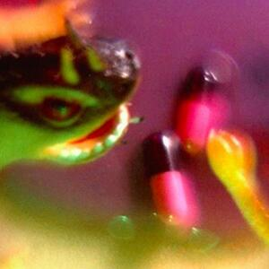 Take the Fall - CD Audio di Bush Tetras