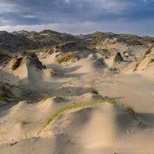 Dune Worship - CD Audio di White Manna