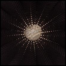 In the Hollows - CD Audio di Nat Baldwin