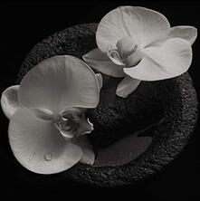 Corpse Flower - CD Audio di Mike Patton,Jean-Claude Vannier