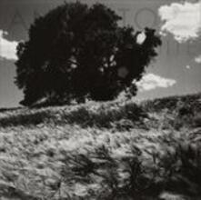Invisible White - Vinile LP di Ancestors