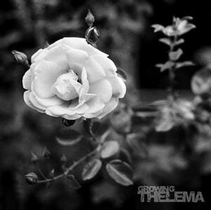 Growing - Vinile LP di Thelema
