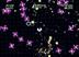 Videogioco Geometry Wars: Galaxies Nintendo DS 1