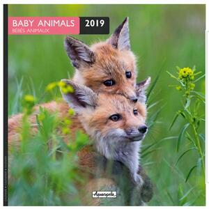 Calendario 2019 Cuccioli Aquarupella. Bebes Animaux - 30x30