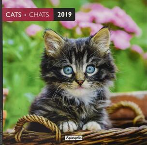 Calendario 2019 Gatti Aquarupella. Chats - 30x30