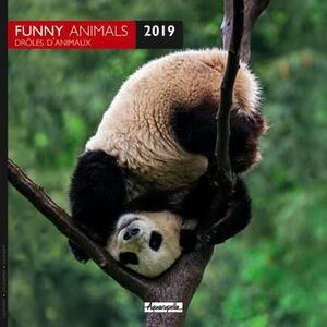 Calendario 2019 Animali divertenti Aquarupella. Drole d'animaux - 30x30