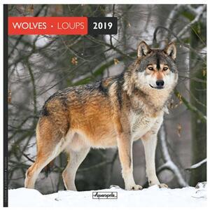 Calendario 2019 Lupi Aquarupella. Loups - 30x30