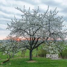 Serendipity - Vinile LP di Orchard