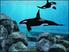 Videogioco Fantasy Aquarium by DS Nintendo DS 6