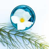 Cartoleria Biglietto d'auguri Beyler-Bol Turquoise Et Fleur Sin Adesso
