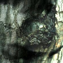 La valse des monstres - Vinile LP di Yann Tiersen