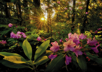 Puzzle 2000 pezzi Magic Forest. Rhododendron - 3