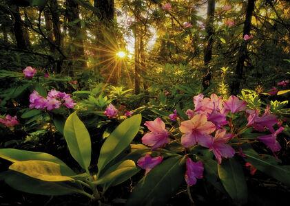 Giocattolo Puzzle 2000 pezzi Magic Forest. Rhododendron Heye 1
