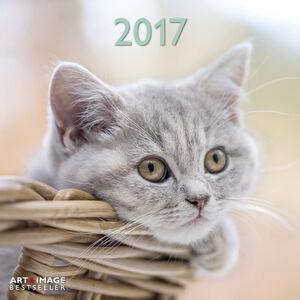 Cartoleria Calendario 2017 Art & Image 30x30. Cats TeNeues 0