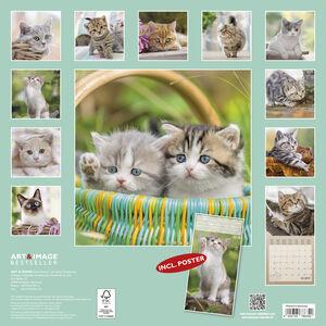 Cartoleria Calendario 2017 Art & Image 30x30. Cats TeNeues 1
