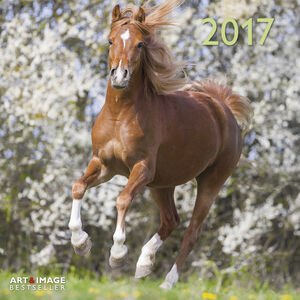 Cartoleria Calendario 2017 Art & Image 30x30. Horses TeNeues 0