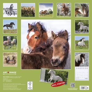 Cartoleria Calendario 2017 Art & Image 30x30. Horses TeNeues 1