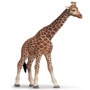 Giraffa femmina - 2