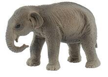 Selvaggi. Indian Elephant Calf