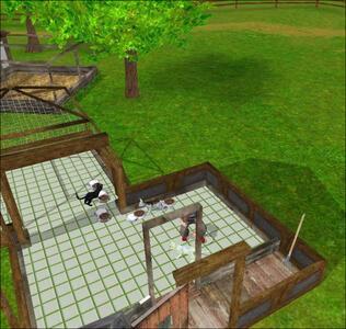 Clinica dei Cuccioli 3D in Australia - 5