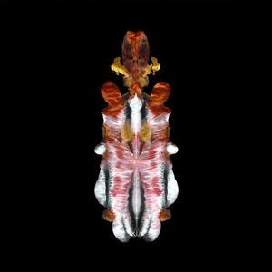 Will to Burn - Vinile LP di Scraps of Tape
