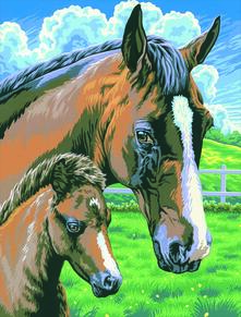 Painting By Numbers Junior, Cavallo E Puledro. 0030