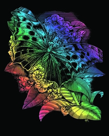 Artfoil Rainbow, Farfalla. 0541