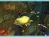Videogioco Shark Tale (versione inglese) Xbox 1
