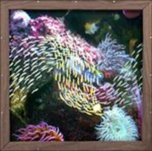 Mayville Dream - Vinile LP di Quicksails