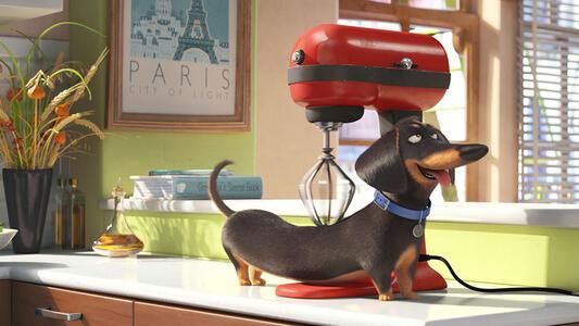 Pets. Vita da animali 3D (Blu-ray + Blu-ray 3D) di Yarrow Cheney,Chris Renaud - 4