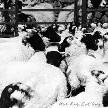 Earl Grey - Vinile LP di Girl Ray