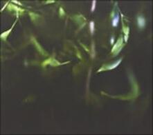 Fall Back - Live at - Vinile LP di Roly Porter