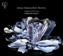 Mottetti - CD Audio di Johann Sebastian Bach,Philippe Herreweghe,Collegium Vocale Gent
