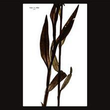 Sult - Vinile LP di Maja Ratkje