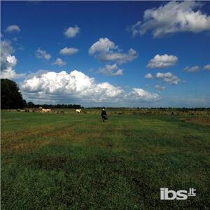 Hilvarenbeek Recordings - Vinile LP di Biosphere