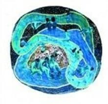 A Space Water Loop - Vinile LP di Life on Earth