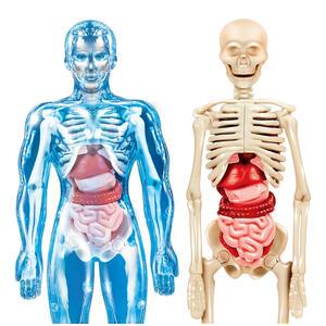 Scienza e Gioco. Il corpo umano - 6