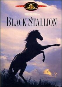 Black Stallion di Carroll Ballard - DVD