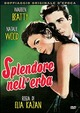 Cover Dvd Splendore nell'erba