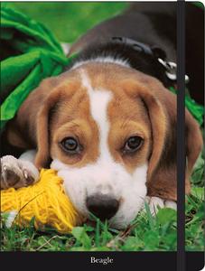 Cartoleria Notebook con elastico Beagle Cartilia