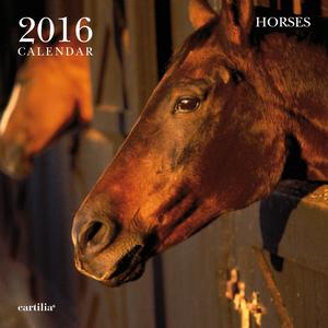 Cartoleria Calendario da parete 30x30 2016: Horses Cartilia