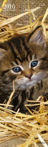 Cartoleria Calendario da parete 16x49 2016: Cats Cartilia