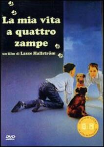 La mia vita a quattro zampe di Lasse Hällstrom - DVD