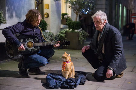 Film A spasso con Bob (DVD) Roger Spottiswoode 5