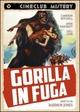 Cover Dvd Gorilla in fuga