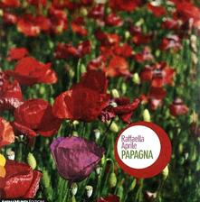 Papagna - CD Audio di Raffaella Aprile