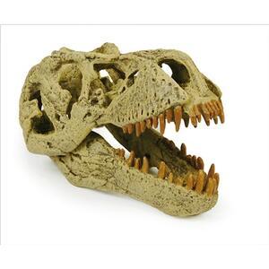 T-Rex teschio - 4