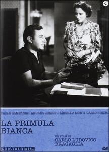 La primula bianca di Carlo Ludovico Bragaglia - DVD