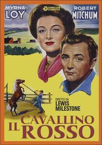 Il cavallino rosso di Lewis Milestone - DVD